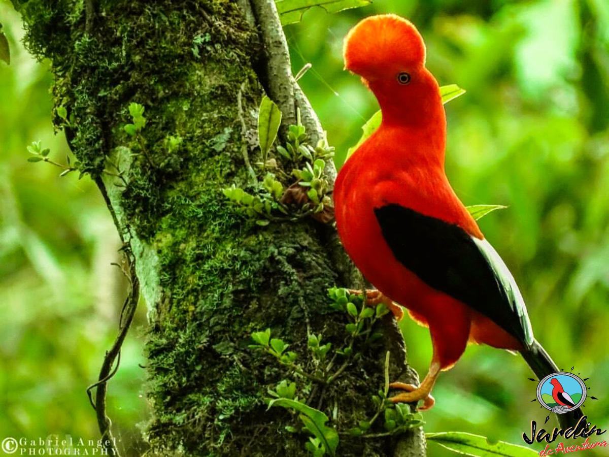 Adicional: parque Natural Gallito de Roca